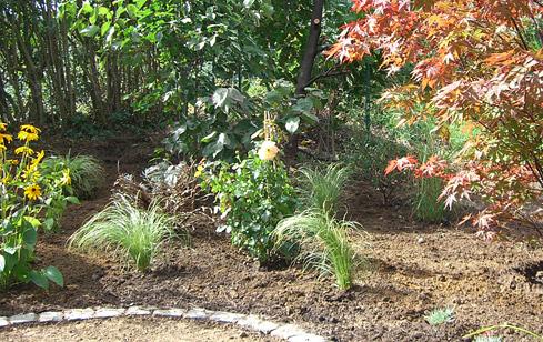 beitragsbilder-pflanzen-stoecker