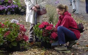 beitragsbilder-wie-wir-pflanzenwahl