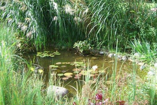 der Teich nach 4 Jahren
