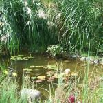 der fertige Teich nach 2 Jahren