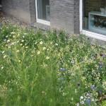wildblumen-3