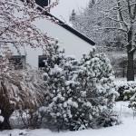 Winter Schönheit